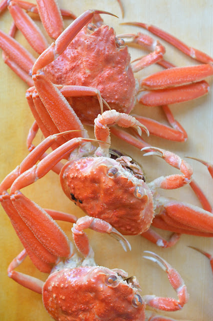 Photo of female snow crabs せいこ蟹の写真 コッペ蟹