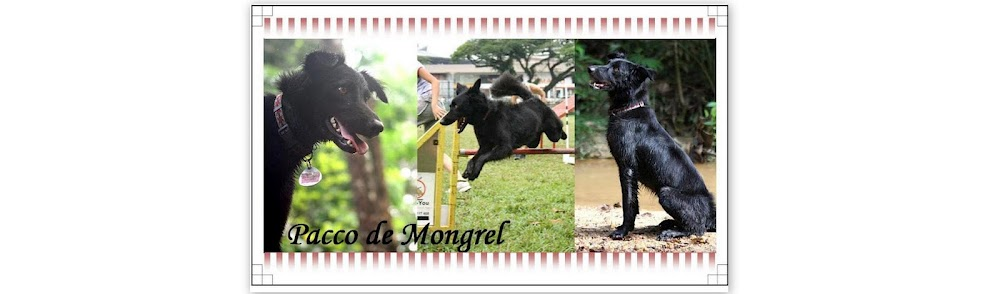 Pacco de Mongrel
