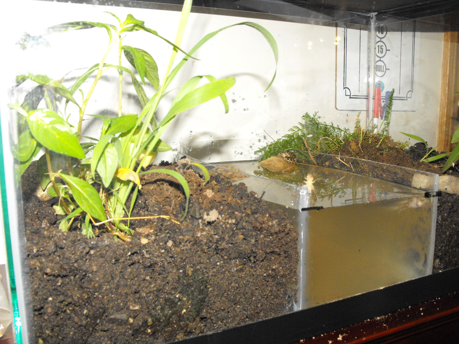 how to make a frog terrarium