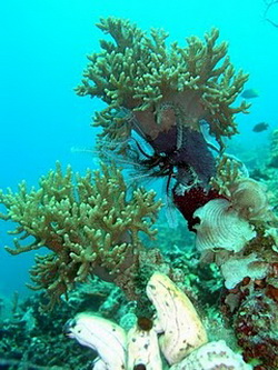 Mansinam Under Water