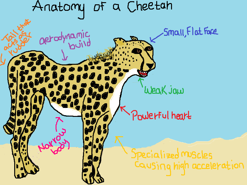 cheetah diagram super serena saves the world everything you ever wanted  super serena saves the world everything you ever wanted