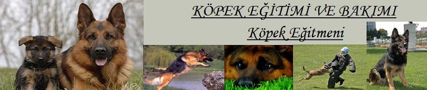 Uzman Köpek Eğitmeni