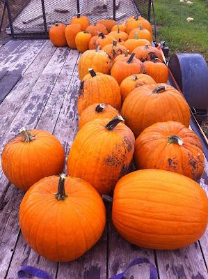 Homestead Garden Pumpkins