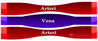 Pembuluh darah arteri dan vena - pembuluh darah - echotuts