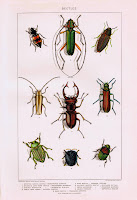 Antique Nature Printable - Insects Beetles via knickoftimeinteriors.blogspot.com