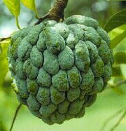 khasiat daun srikaya