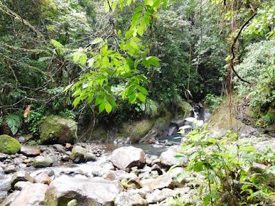 Bassin Bleu dans la végétation tropicale