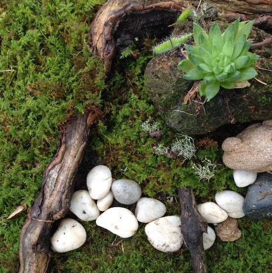 How To Plant Moss   And Why You Should