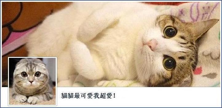 最可爱猫咪 - 雪山 - .