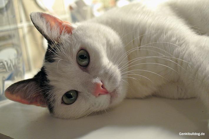 Die böse Katze