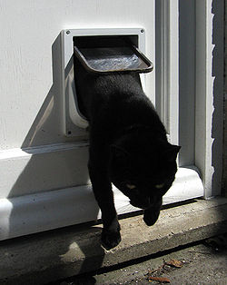 training cat with flap