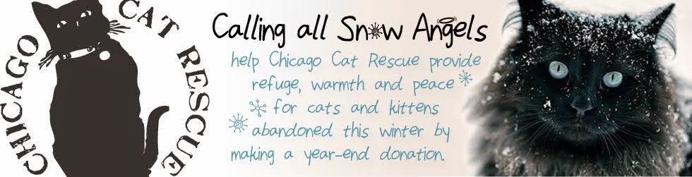 Chicago Cat Rescue