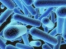 Obat Untuk Penyakit Kolera