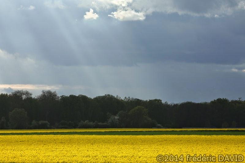 champ colza ciel nuages rayons solaires Seine-et-Marne