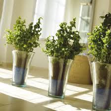 jenis dan fungsi ada dua jenis tanaman hias berbunga dan