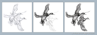 wild ducks drawing stages by Igor Lukyanov (cross-hatching)