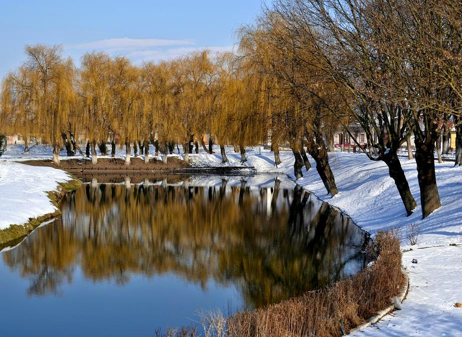 Alley with willows for entry in Fagaras Fortress, Tansilvania, Brasov