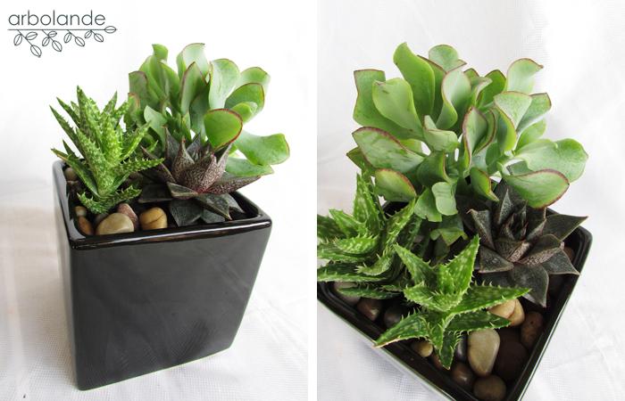 Arbolande para padres amantes de las plantas for Plantas crasas interior