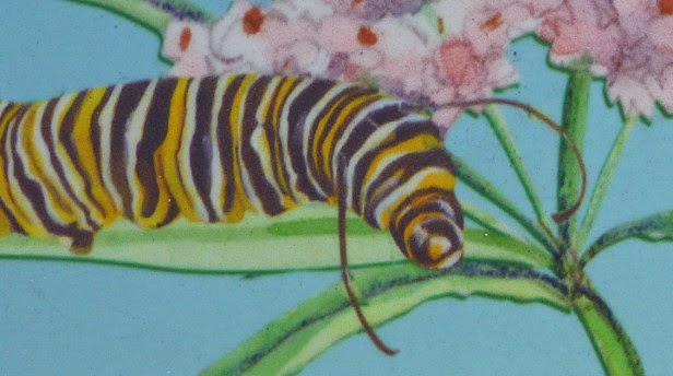 Illustration of a monarch caterpillar