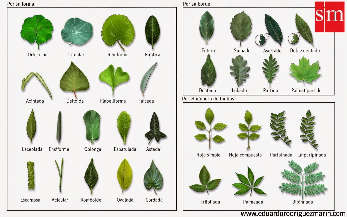 plantas hojas naturales artesanias de de hojas de colombia tipos de