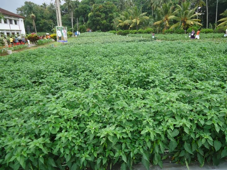 sri lanka agriculture technology and culture Sri lanka new agriculture  traditional culture of a small country like ours  food technology and post harvest technology sri lankan agriculture today.
