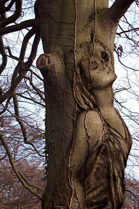 الأشجار تموت واقفه