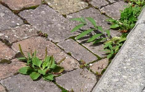 le monde selon mo233 truc se d233barrasser des mauvaises herbes