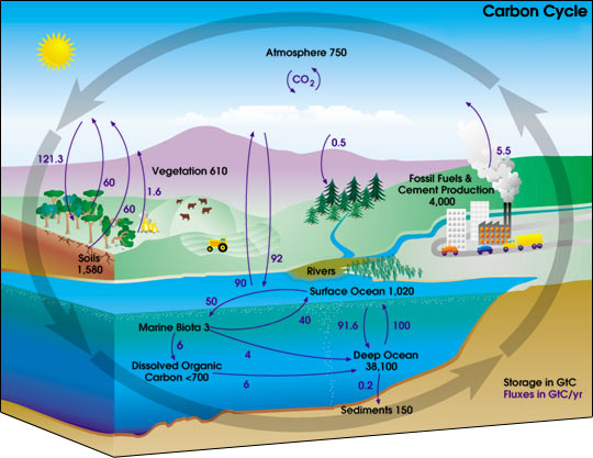 Evs  Structure Of Ecosystem