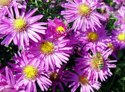 Il giardino sfumato colore nel giardino d 39 autunno - Settembrini fiori ...
