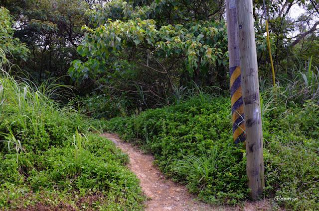 回望出口的電線桿。旁邊即是往雞南山的山路。