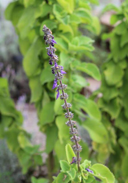 Dans le jardin une femme d 39 un certain ge - Invasion d araignee dans le jardin ...