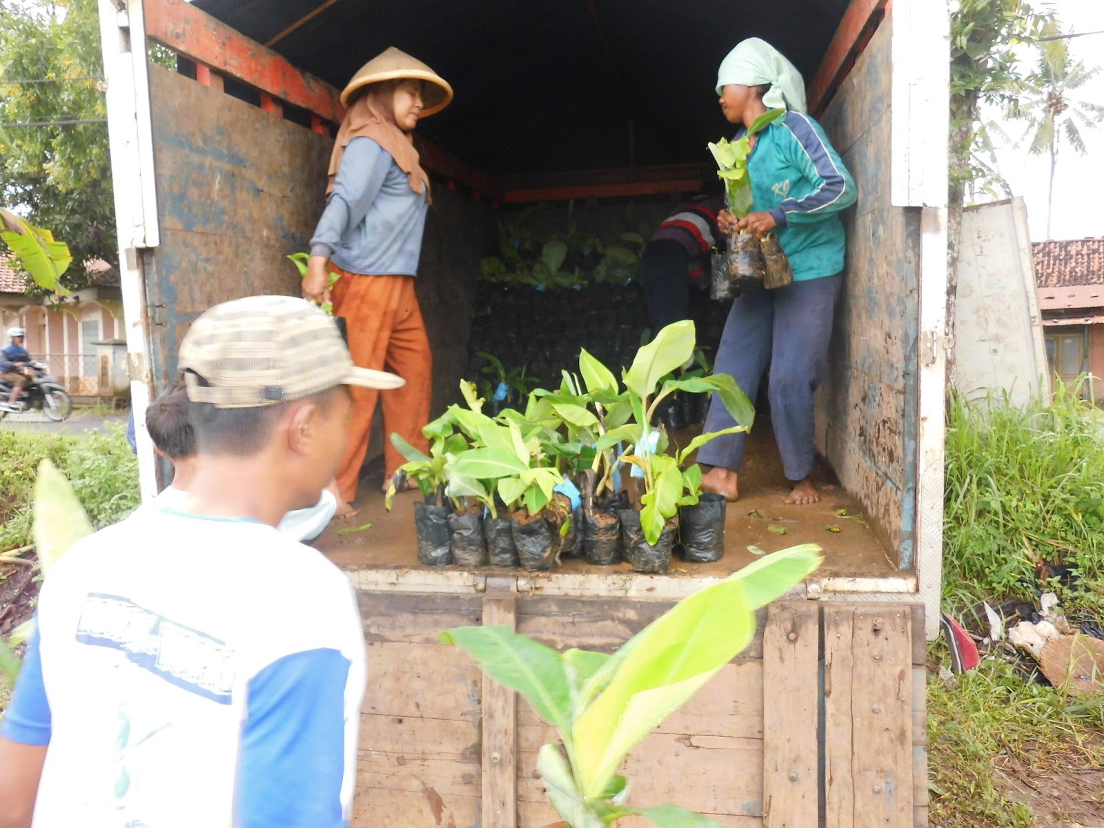 Cv Wahyu Tani Putra Januari 2013 Keripik Rumput Laut By Jawaria Pal Pengiriman Bibit Bermutu Bersertifikat