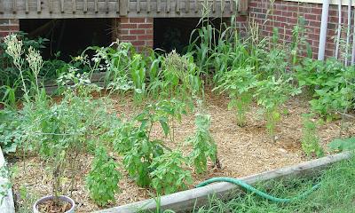 Vicky's entire veggie garden
