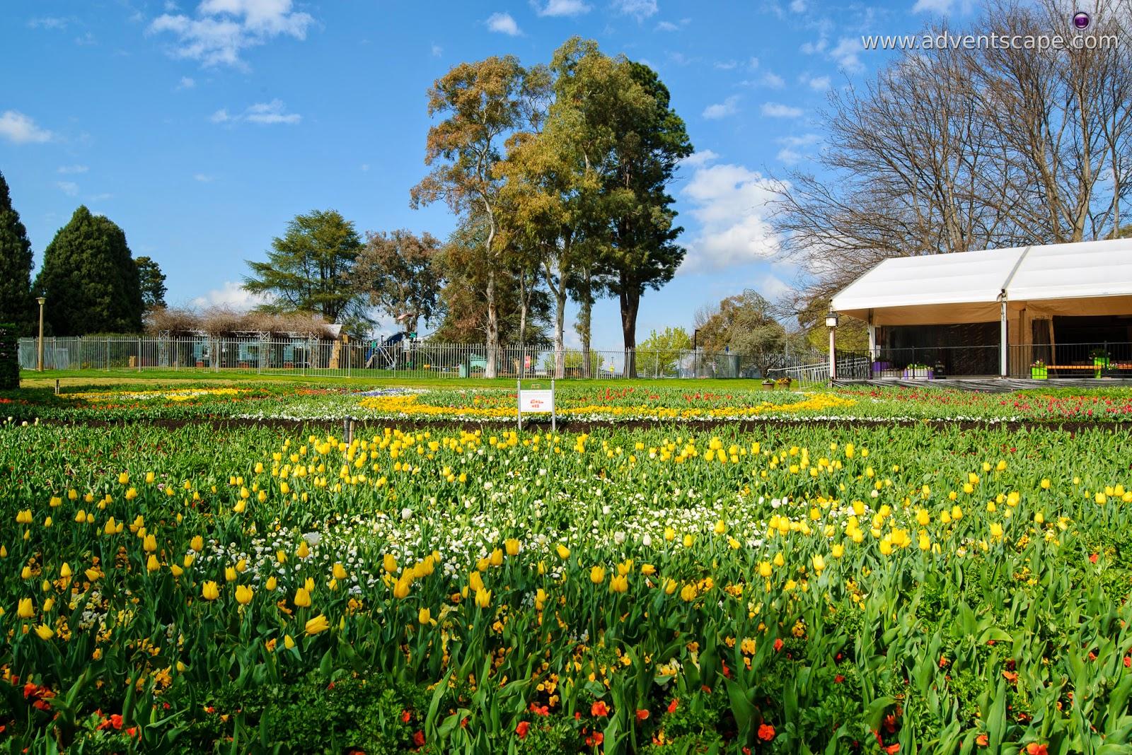 Philip Avellana, iori, advenscape, Floriade, 2014, spring festival, Canberra, ACT, Australian Capital Territory, park, flowers, blossom