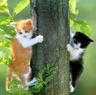 kucing comel4 Gelagat Si Comel
