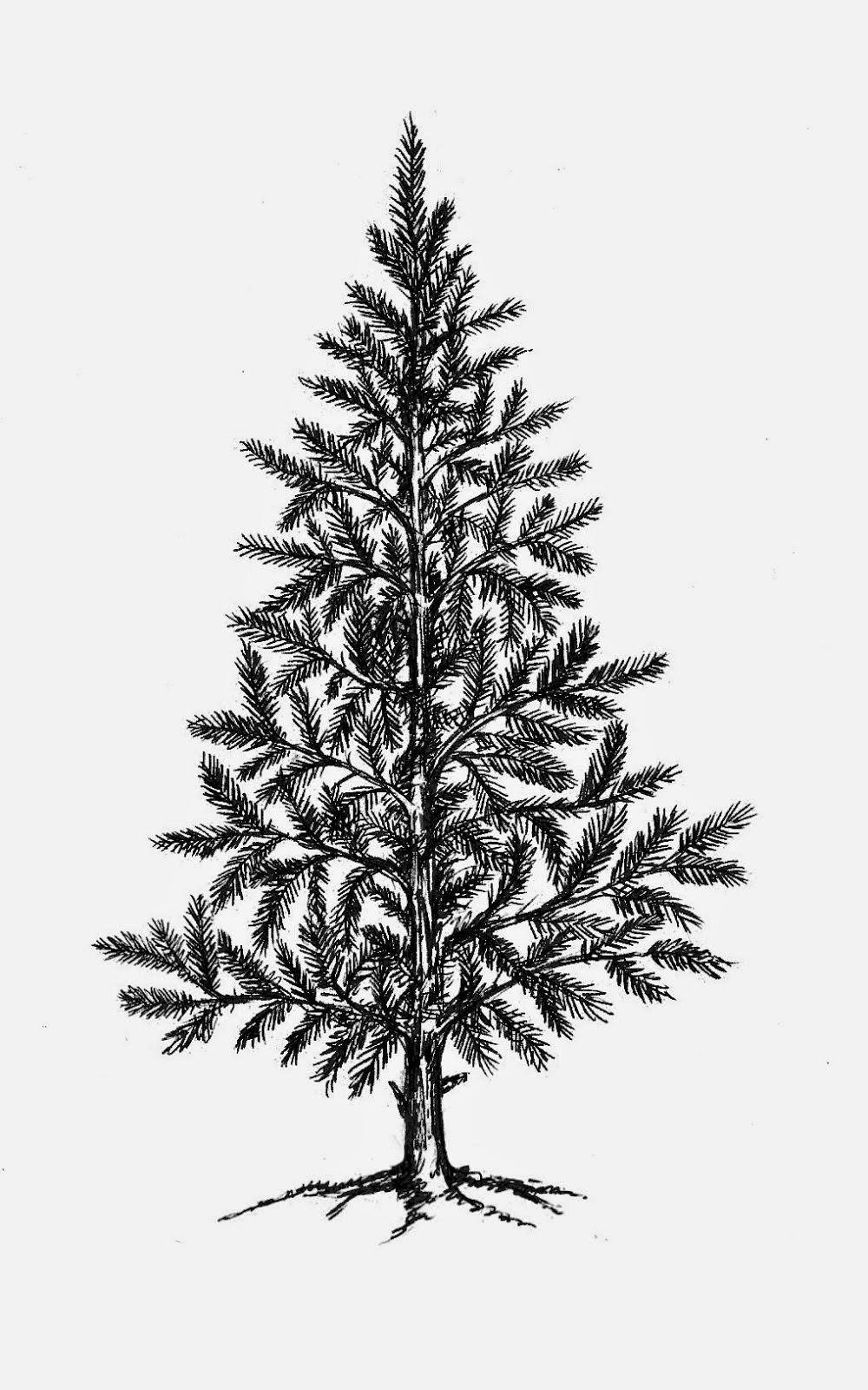 http://www.artjourney.nl/art-journey/44822-christmas-trees--single-smalle.html