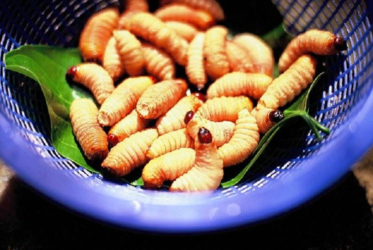 món nhậu đuông dừa luộc nước dừa