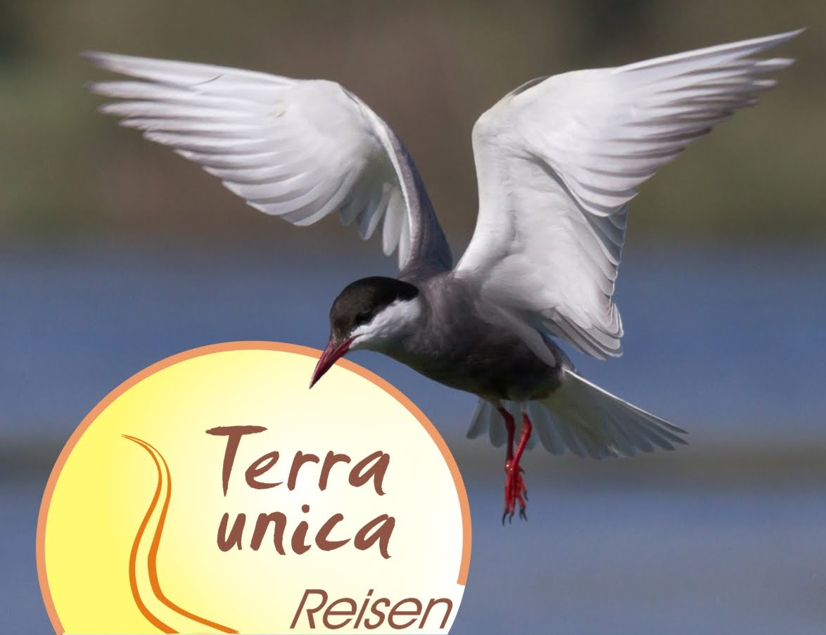Zur Terra Unica Homepage