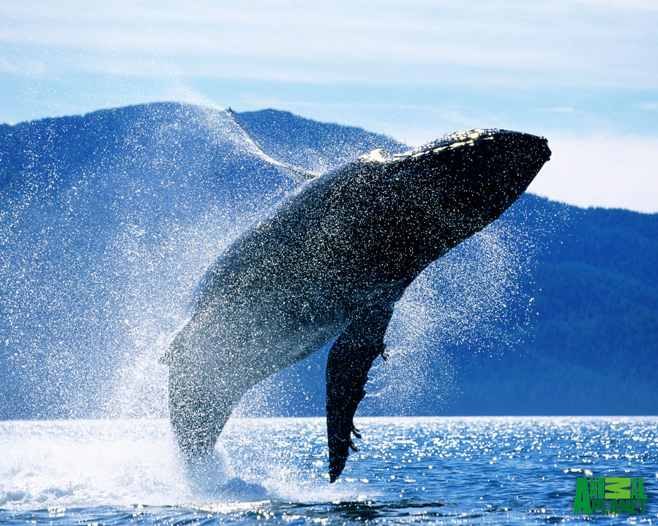 Whale wallpaper - photo#4