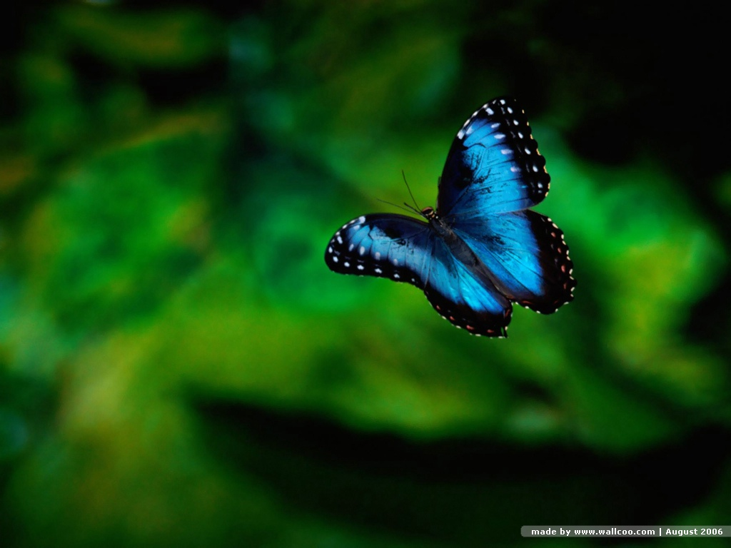 http://1.bp.blogspot.com/-KYvw6CZNNuo/The9Or4Y0SI/AAAAAAAAiJI/nBWDGmH5NBM/s1600/wallpaper_de_borboleta_azul-36217.jpg