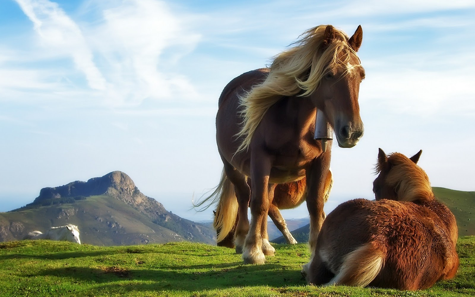 Horse Wallpapers Pictures Of Horse Hd Animal Wallpapers