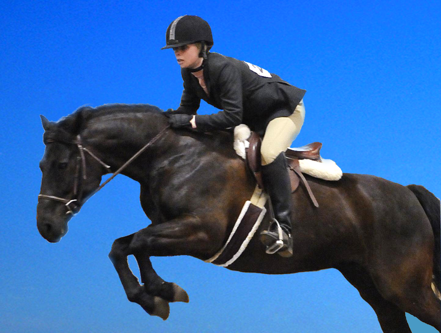 Black horses jumping - photo#4