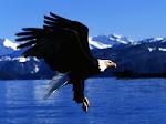 Mas os que esperam no senhor renovarão as suas forças e subirão com asas como de águias:Is 40:31