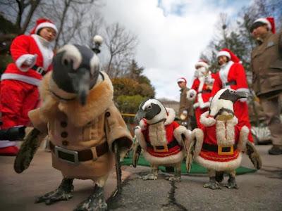 Foto-Foto Burung Penguin Ikut Merayakan Natal