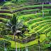 Tempat Wisata Ubud Bali