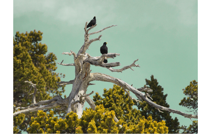 ciel turquoise oiseaux noirs