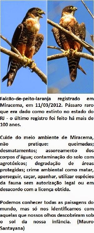 Clique - aves e paisagens rurais de Miracema
