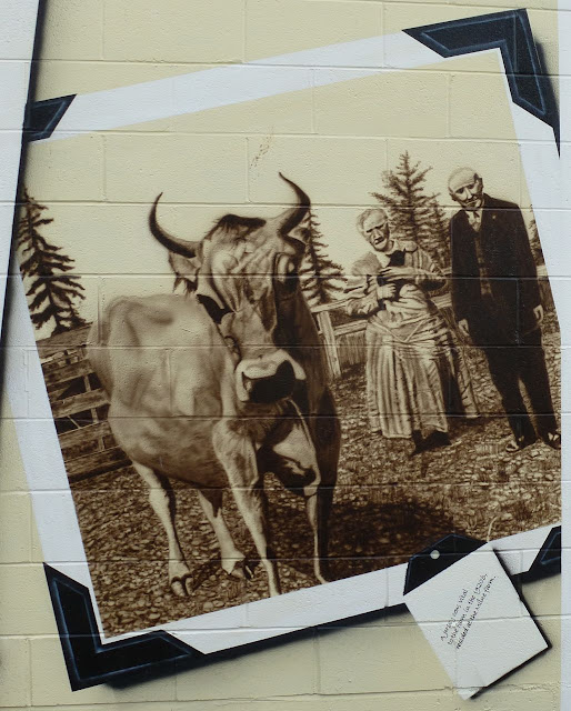Sooke Agriculture Historium mural - Jersey cow