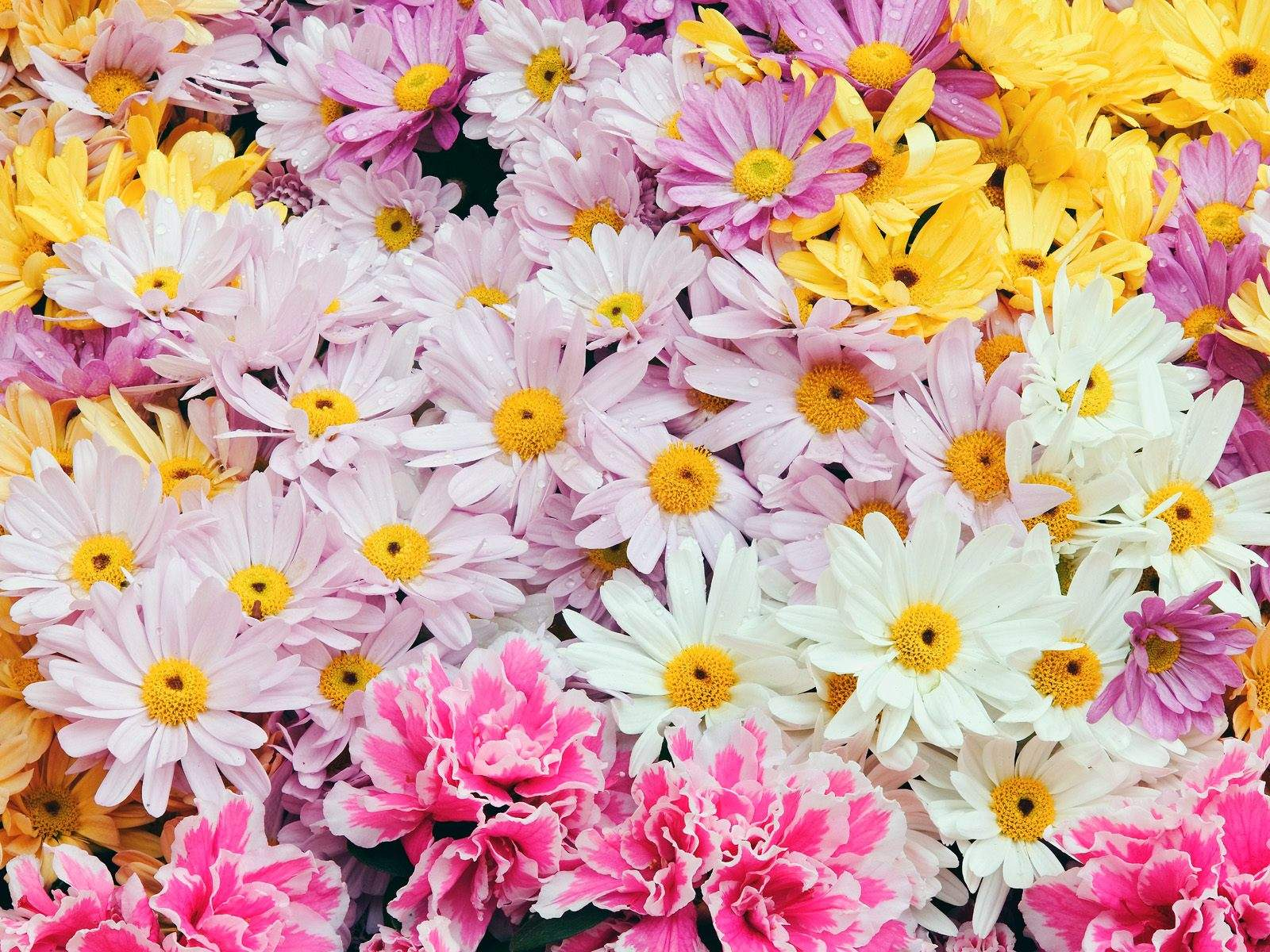 Related keywords suggestions for natural beauty flowers photos natural beautiful flow dhlflorist Images