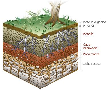 Medio ambiente umg for Como se creo el suelo
